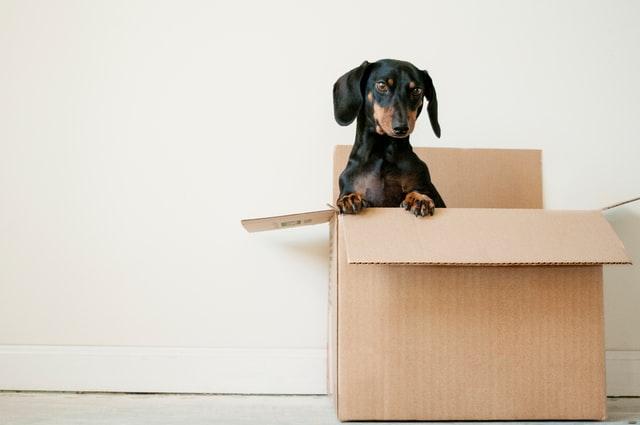 Vervoeren van meubels zoals een koelkast
